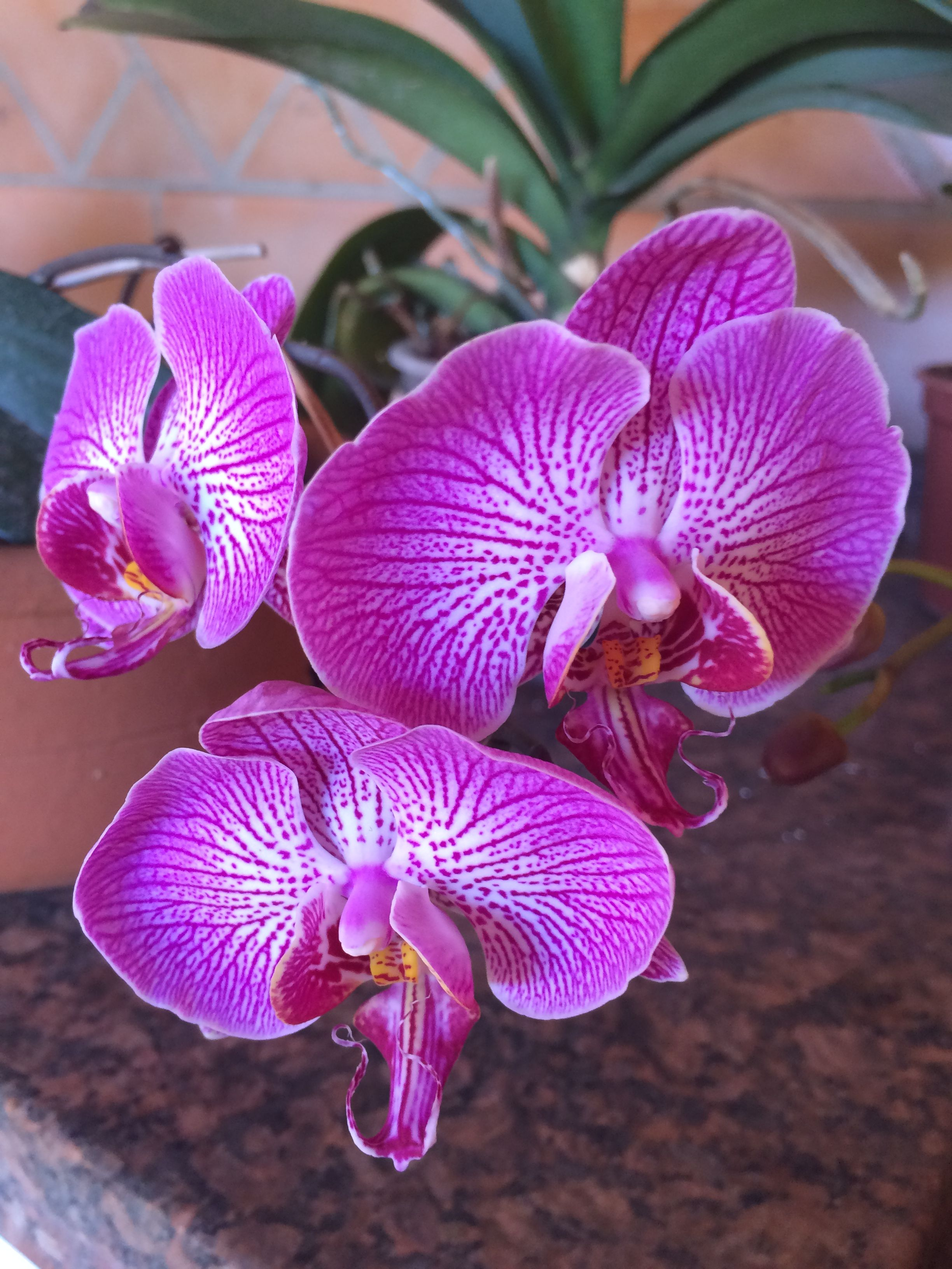 Orquídeas ❤️