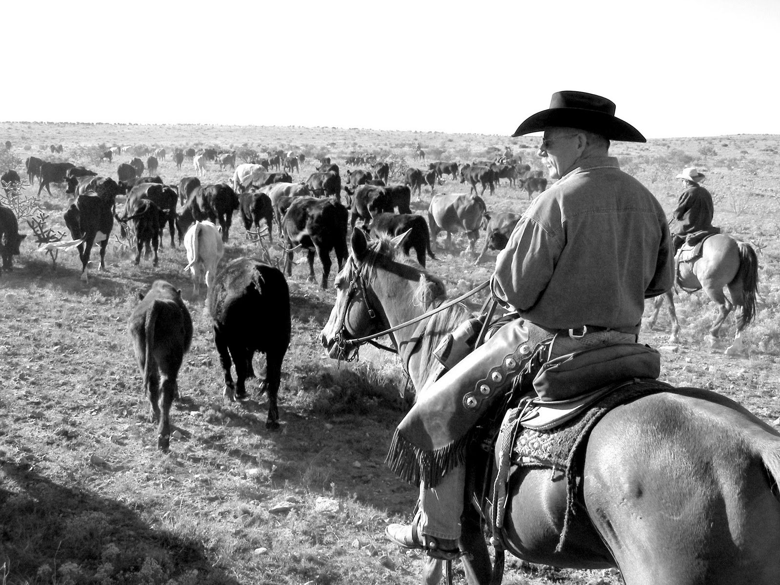Cattle Drives A Truly Western Experience Cattle