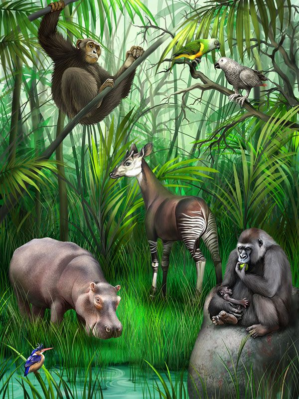 Animals in the forest is an interactive ebook for children animals in the forest is an interactive ebook for children pressing on each fandeluxe Gallery