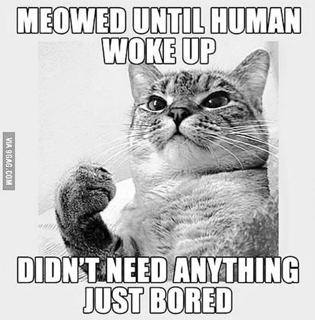19 Things Only Cat Owners Know To Be True Funny Cat Memes Funny Cat Pictures Crazy Cats