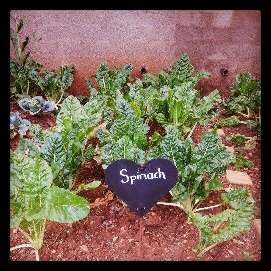 DIY veggie garden name boards