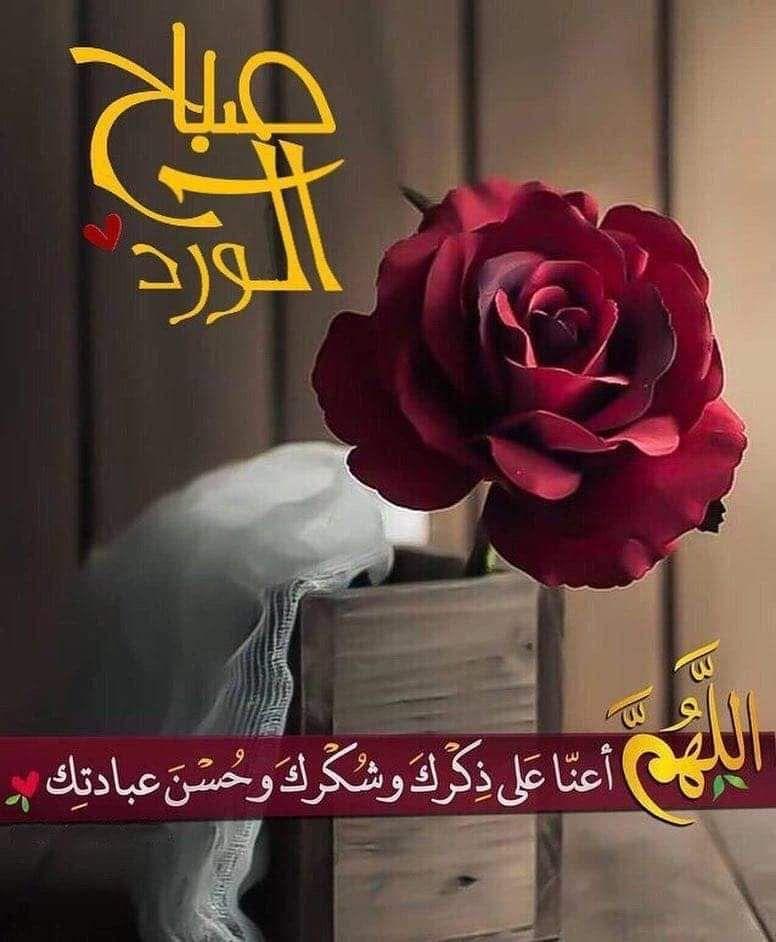 صباح الورد Good Morning Images Flowers Good Morning Flowers Beautiful Morning Messages