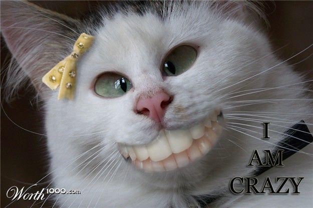 Super Funny Cats Crazy Cat Pictures Crazy Cats Cat Pics