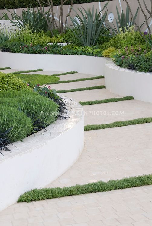 Garden Path With Raised White Wall Beds And Thymes In Crevices In Modern  Upscale Garden With