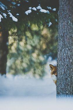 Metade de uma raposa.