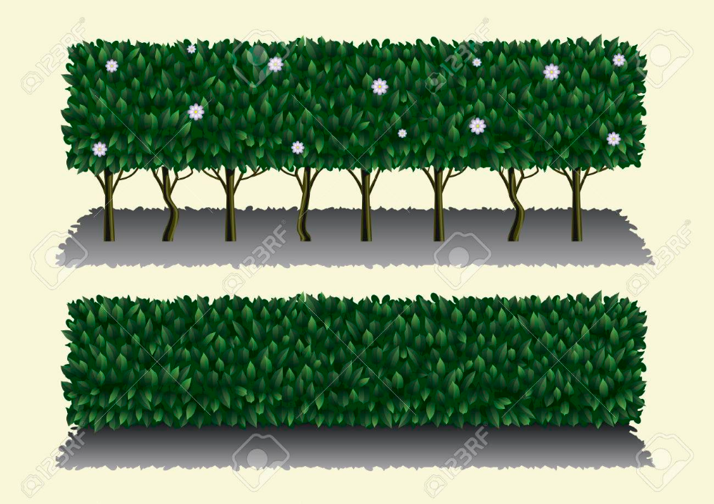 Long Hibiscus Bush As A Green Hedge Or Fence Stock Vector 47409793 Hibiscus Bush Hedges Hibiscus