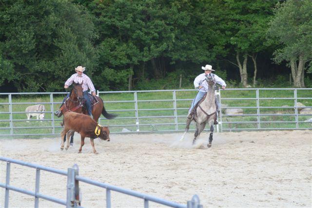 Grulla Mare (Sage) | Grulla horse, Quarter horse, Horses