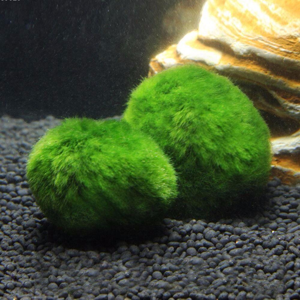 Nicrew cm mini akwarium roślin akwarium krewetki nano dla marimo