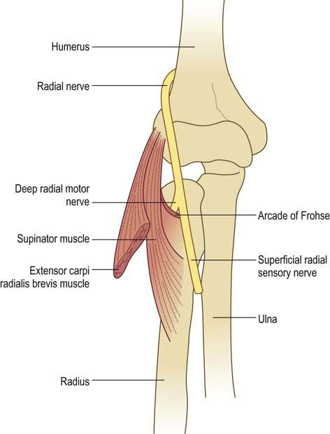 What Is Radial Balance In Art: Close Up On Elbow With Radial Nerve