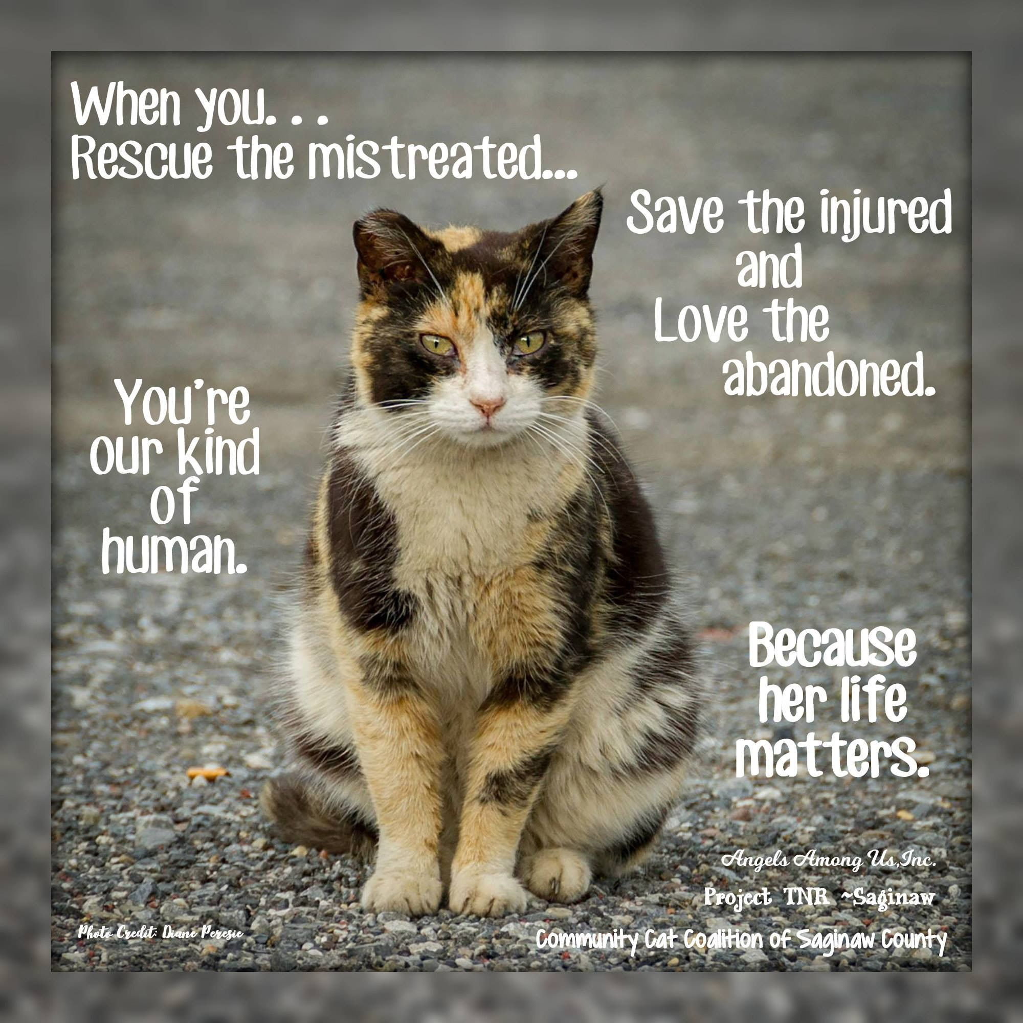 Pin By Poorva Vishwas On Meow Foster Animals Animals Cats Kittens
