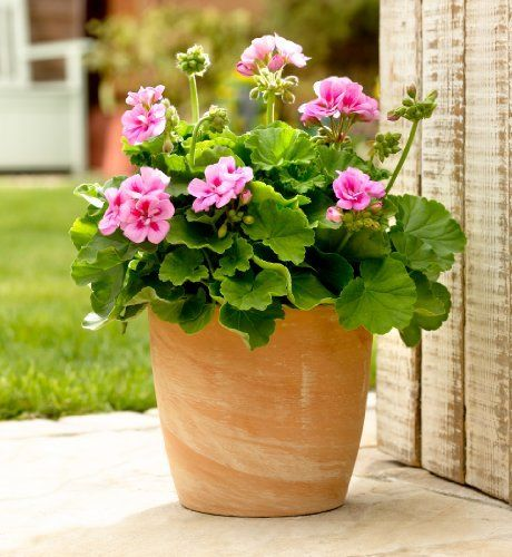 Pink Garden Planters