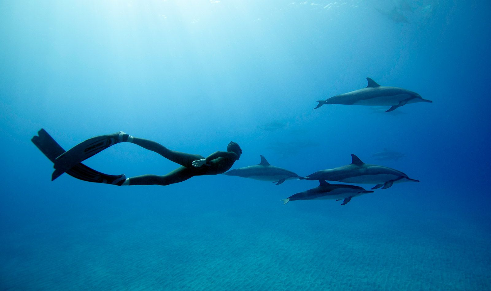freediving with hawaiian spinner dolphins