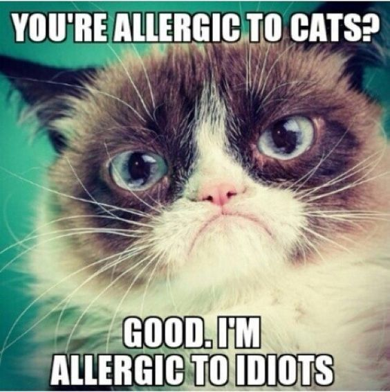 A Collection Of Grumpy Cats Best Memes I Can Has Cheezburger - 18 hilarious sad cat problems that might explain why your cats so moody