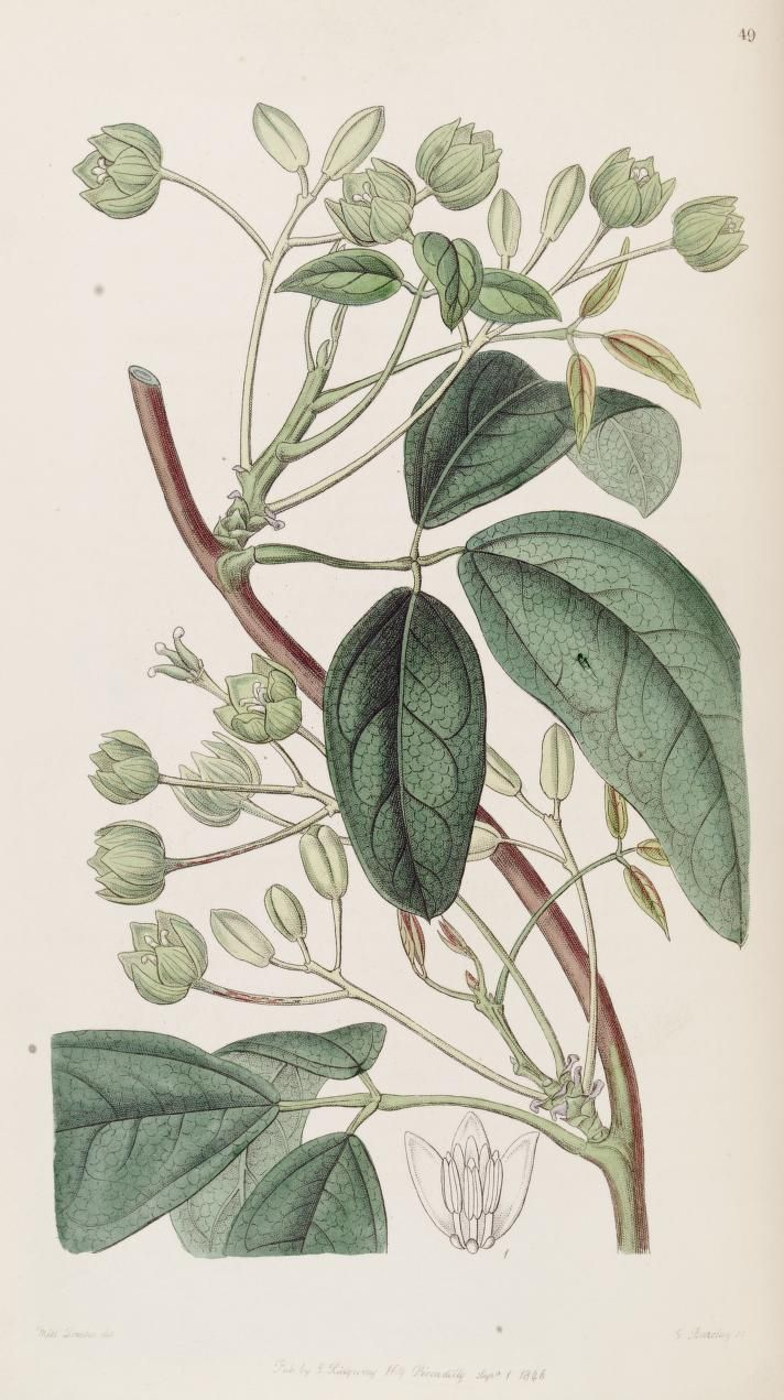 v. 32 (1846) - Edwards's botanical register. - Biodiversity Heritage Library