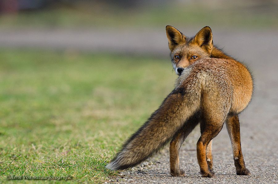 One last look by René Vos on 500px Animals beautiful