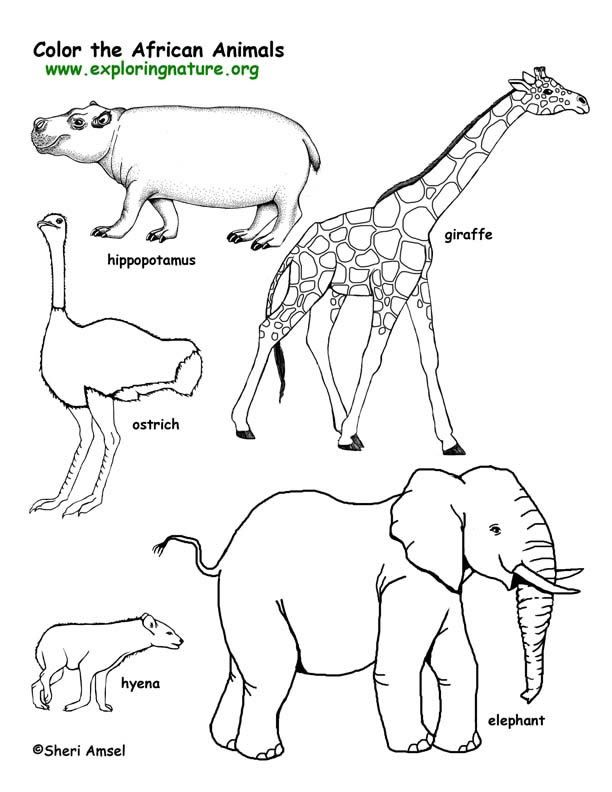 african animals coloring pages African Animals Coloring Pages | Savanna (African) Animals  african animals coloring pages