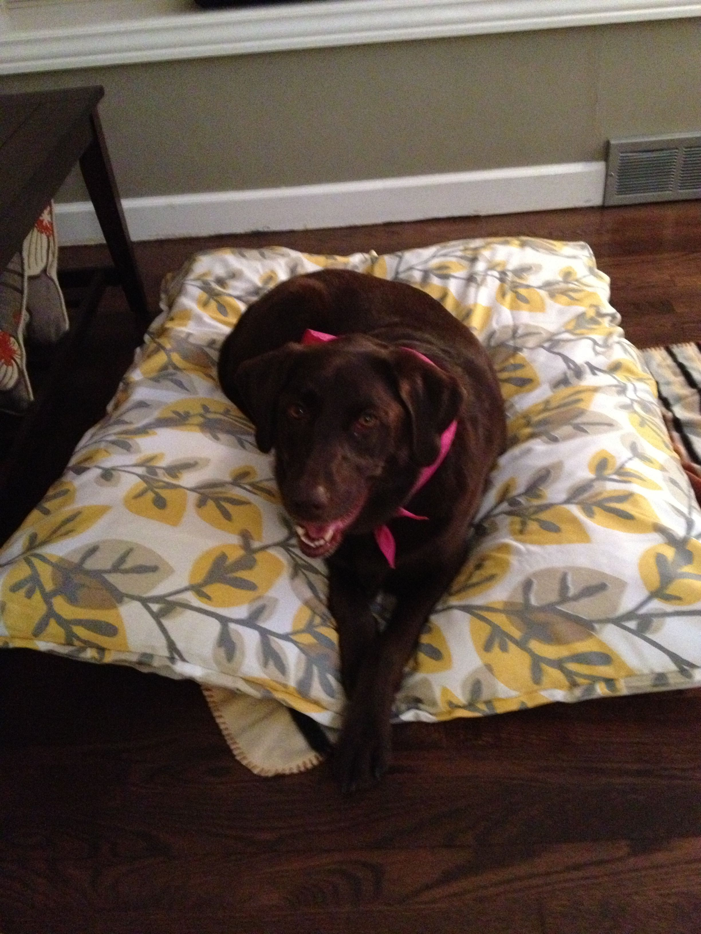 Diy dog bed table cloth button 4 pillows and a twin