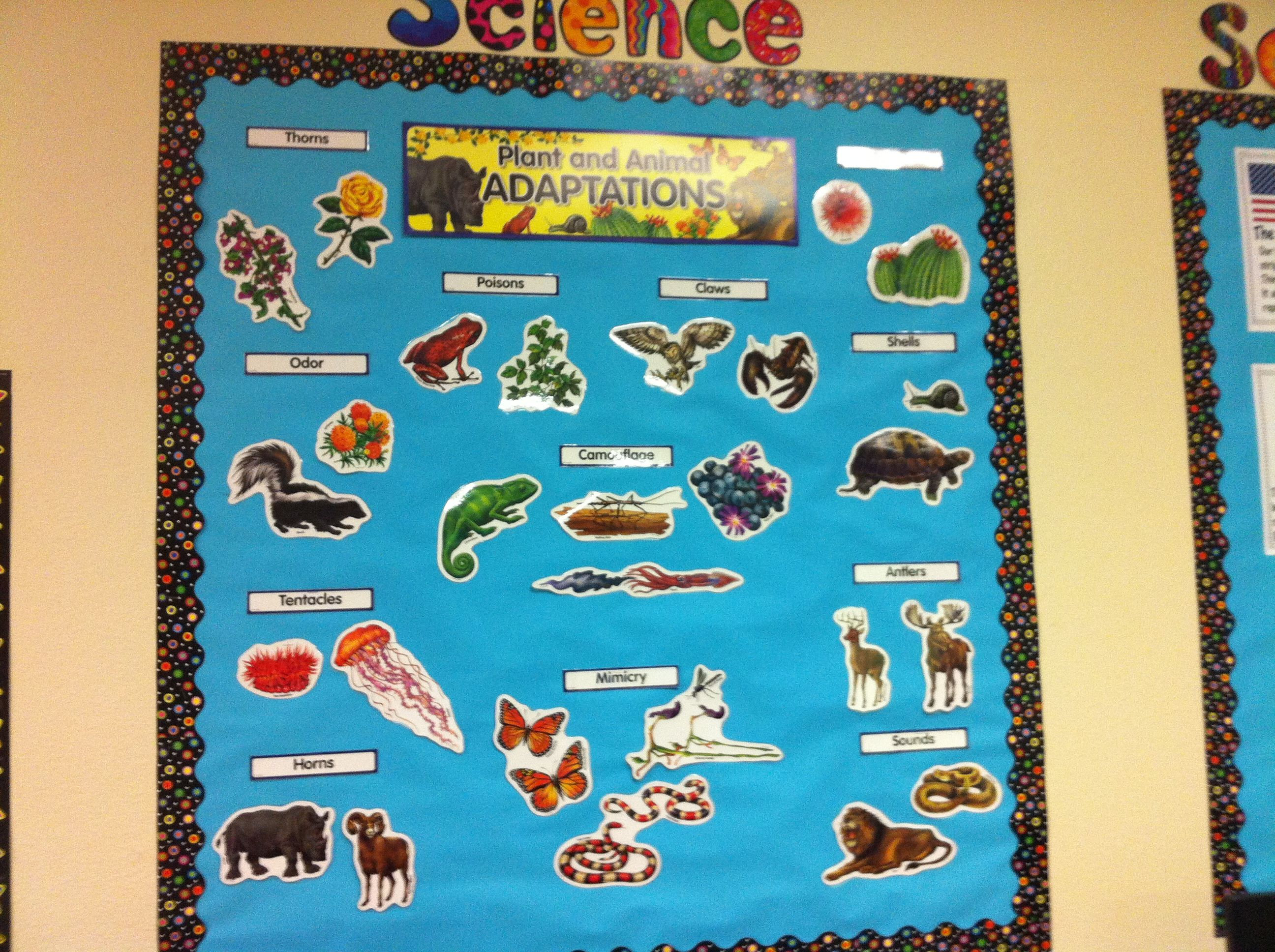 Plant And Animal Adaptations Mini Bulletin Board Set