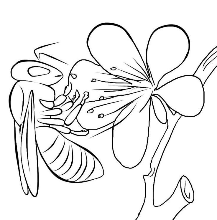 for kindergarten Free Printable Bee Coloring Pages For