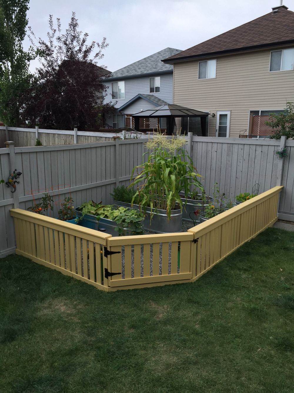 Raised bed garden and fence Raised bed