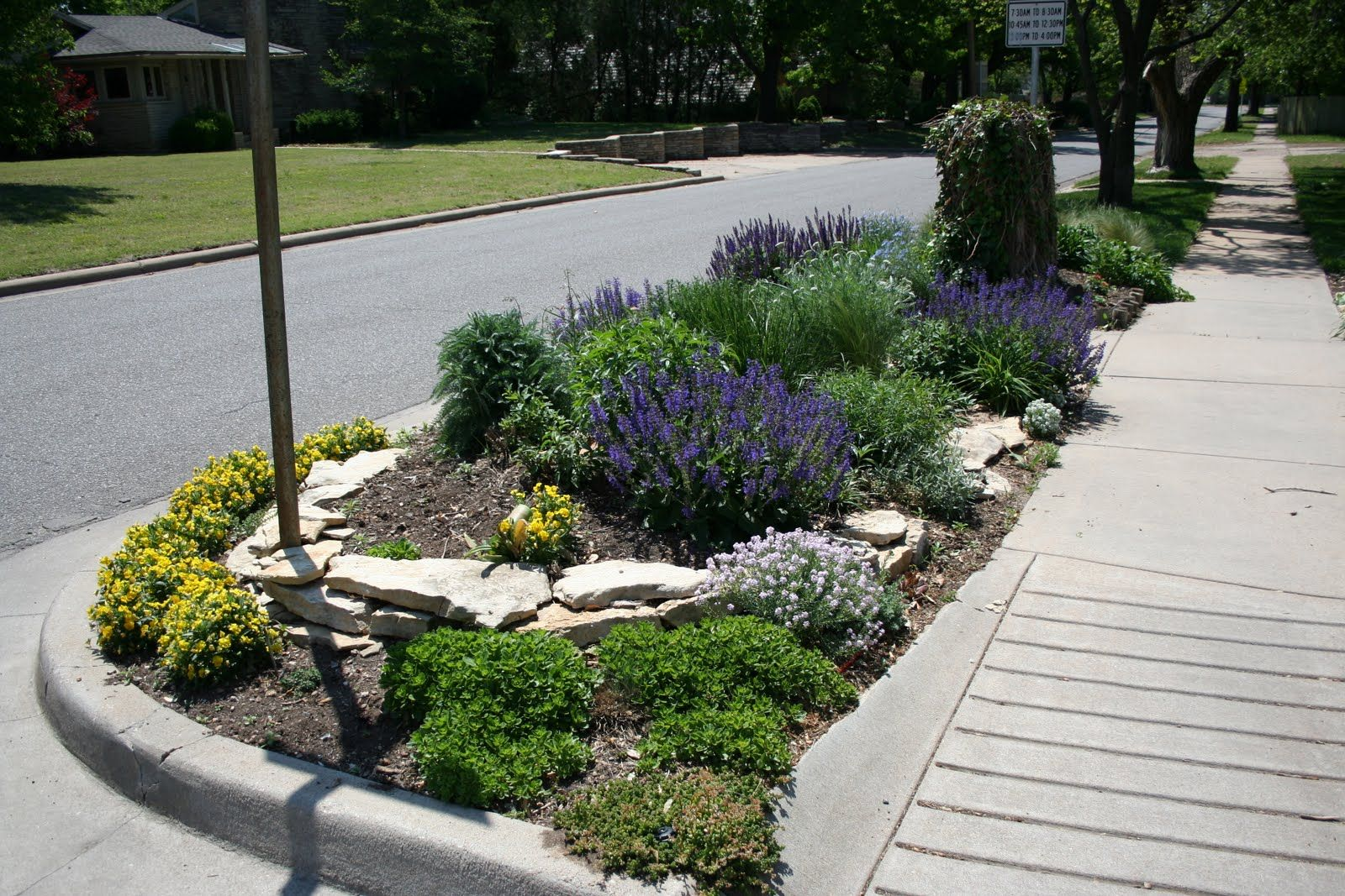 sidewalk garden hell strip design ideas xeriscape - Google Search | Yard