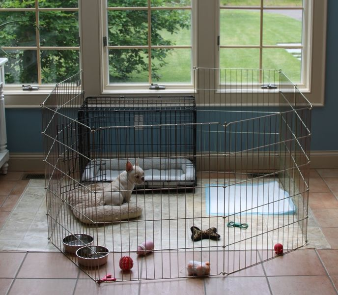 Crate Training Your Puppy French Bulldogs Crate Training Rowdy