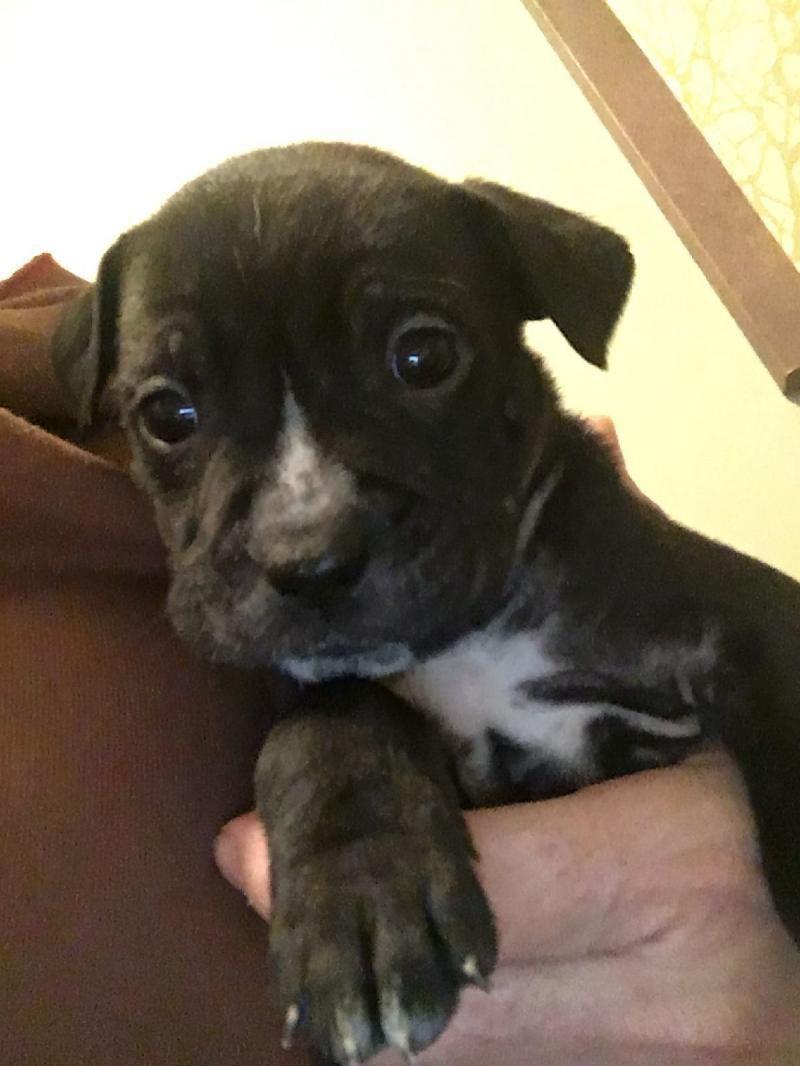 Snickerdoodle Born around November 29th 2017. This
