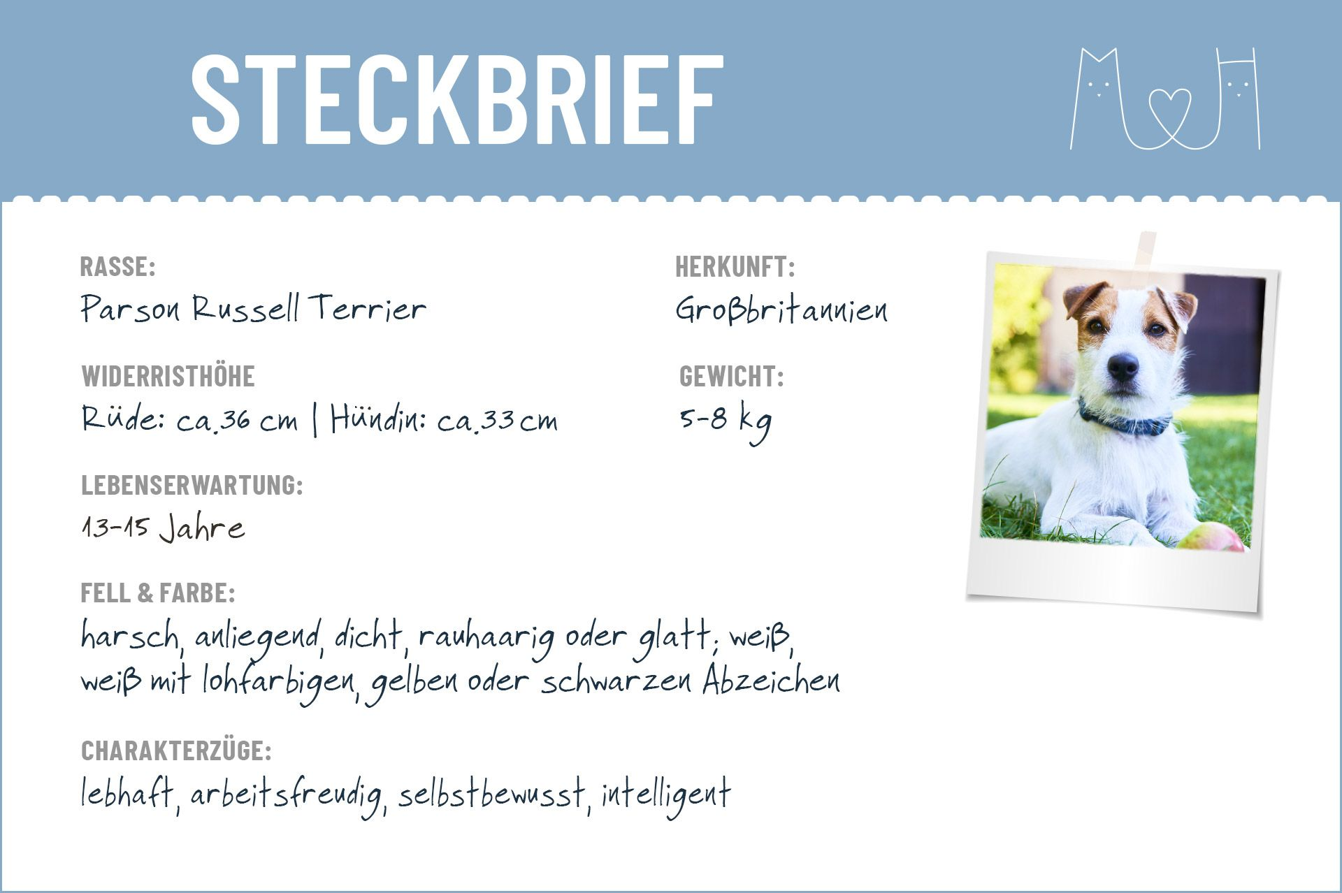 Parson Russell Terrier Steckbrief Charakter Wesen Haltung In 2020 Parson Russell Terrier Russell Terrier Terrier