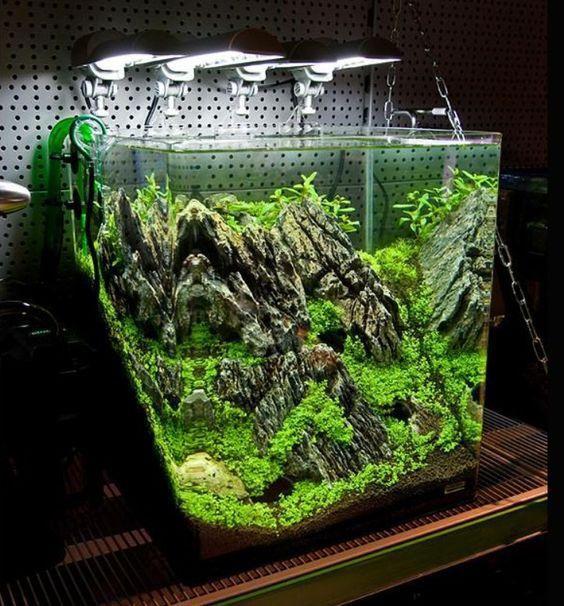 Aquarium, Aquarium Fish