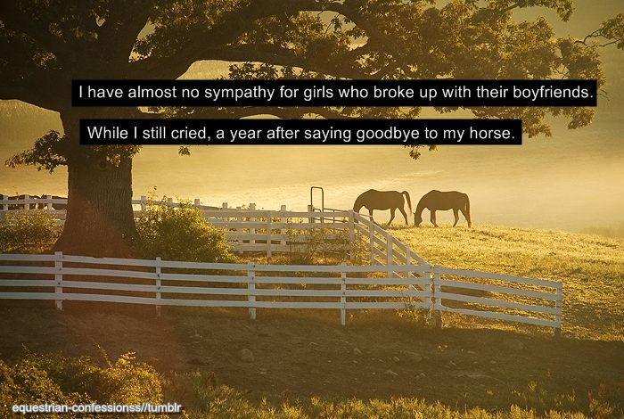I Miss You More Than Anything Quotes: I Miss My Horse More Than Anything RIP Kode Bar None