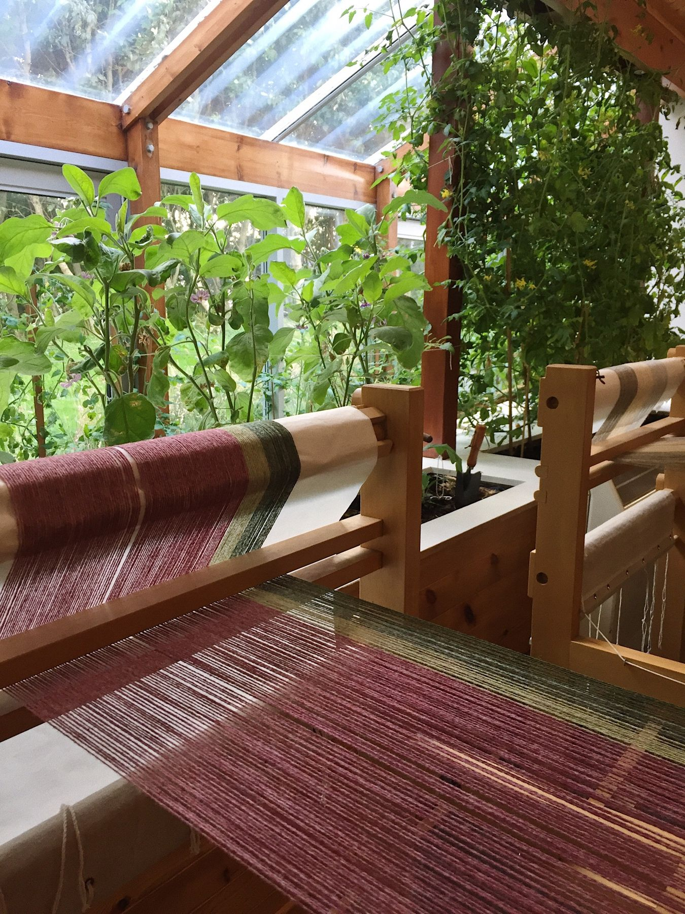 Taken in the height of summer, we love looking back on all of our lovely greenery. Especially in contrast with this lovely shade of pink! 🌸 #orkney #visitorkney #loomweaving #weaversofinstagram #loom #weaving #design #striped #stripes #wool #shetlandwool #handmade #workshop #learning #course