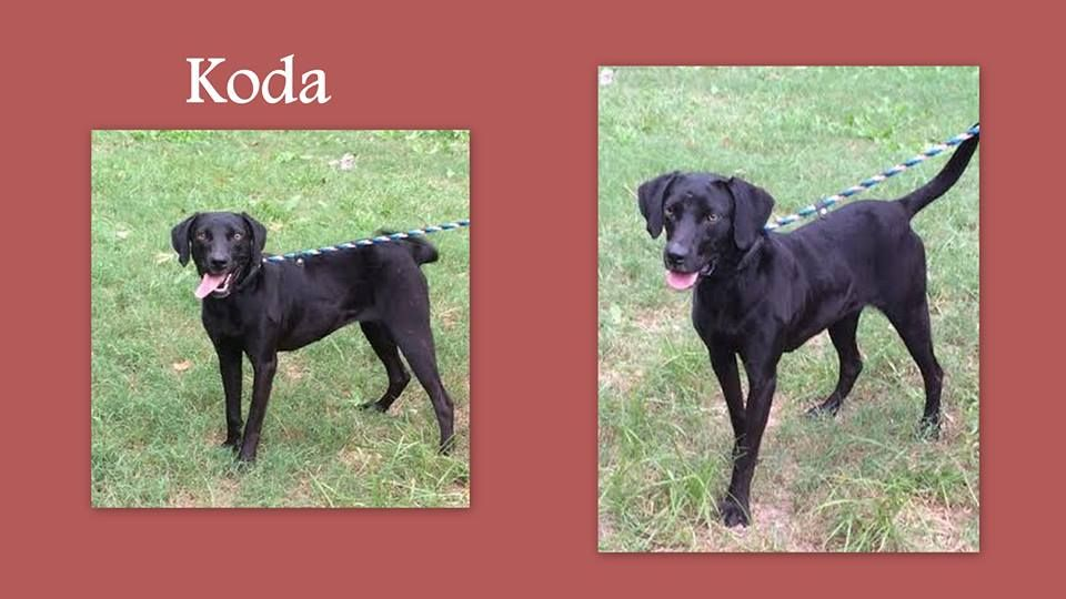 Hinesville, GA Kill Shelter Rescues Only If You Can