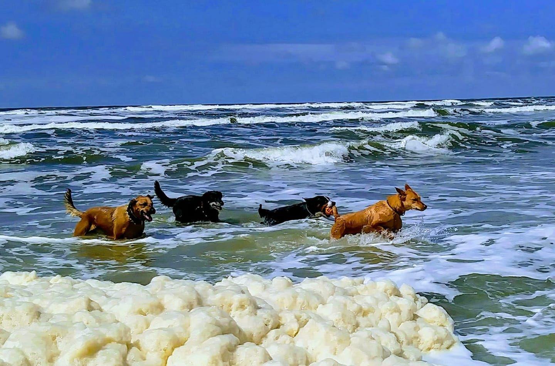Urlaub Mit Hund Auf Texel Danke An Andrea Fur Das Bild Holland Hundefreundlich Hundestrand Niederlande Hundeur Hundestrand Urlaub Mit Hund Urlaubsbilder