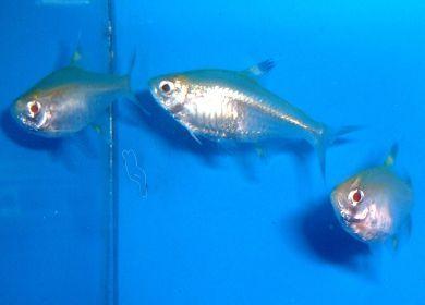 X Ray Fish Fish Fish Pet X Ray