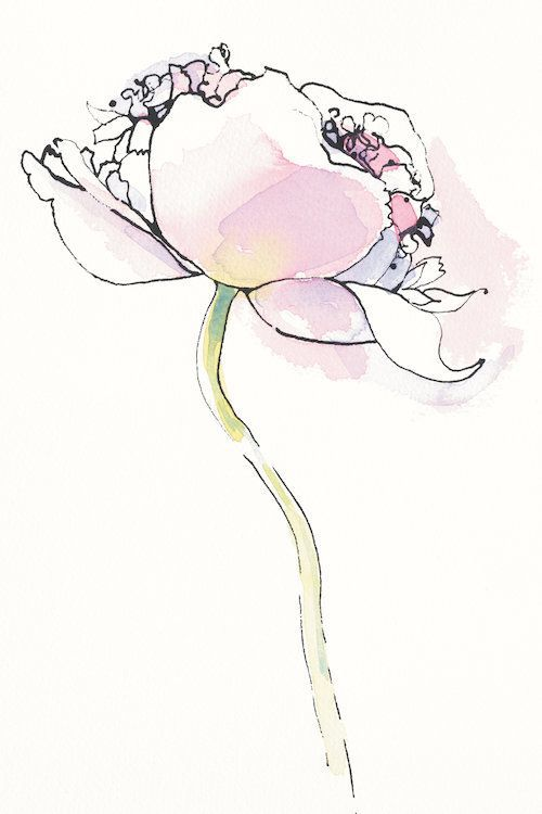 Single Pink Somniferum I by Shirley Novak Graphic Art on Wrapped Canvas