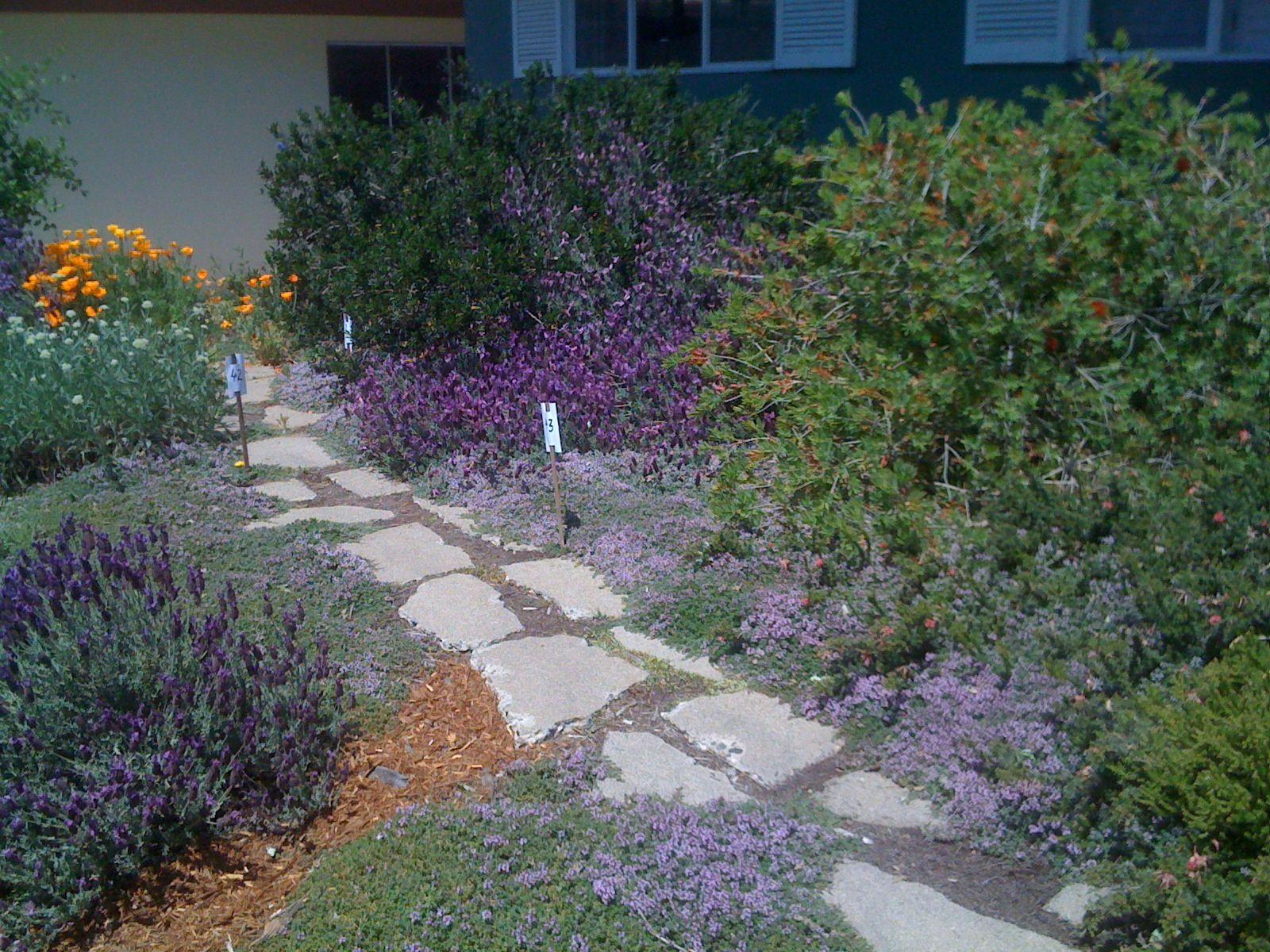 native plant garden design