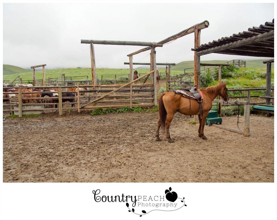 Hf bar ranch wyoming wyoming travel horses
