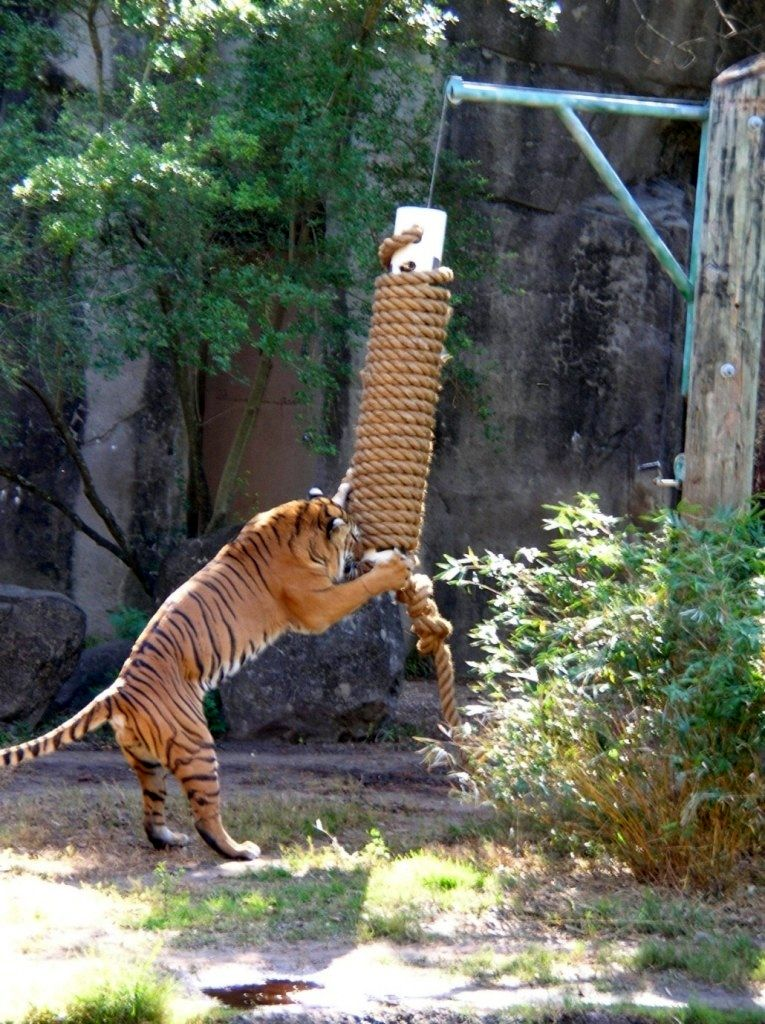 DIY Hanging Scratching Post Zoo, Animals