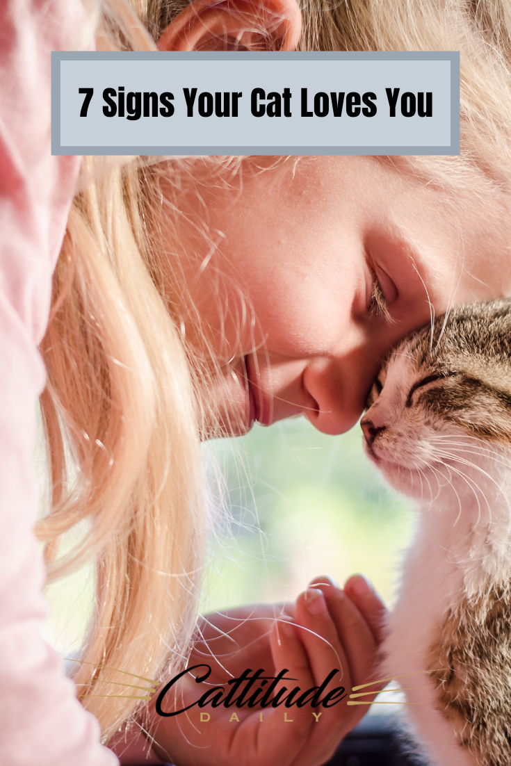 7 Signs Your Cat Loves You In 2020 Cat Love Cat Behavior Cats