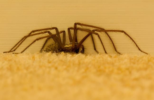british homes are being invaded by giant spiders here s how to get rh pinterest com