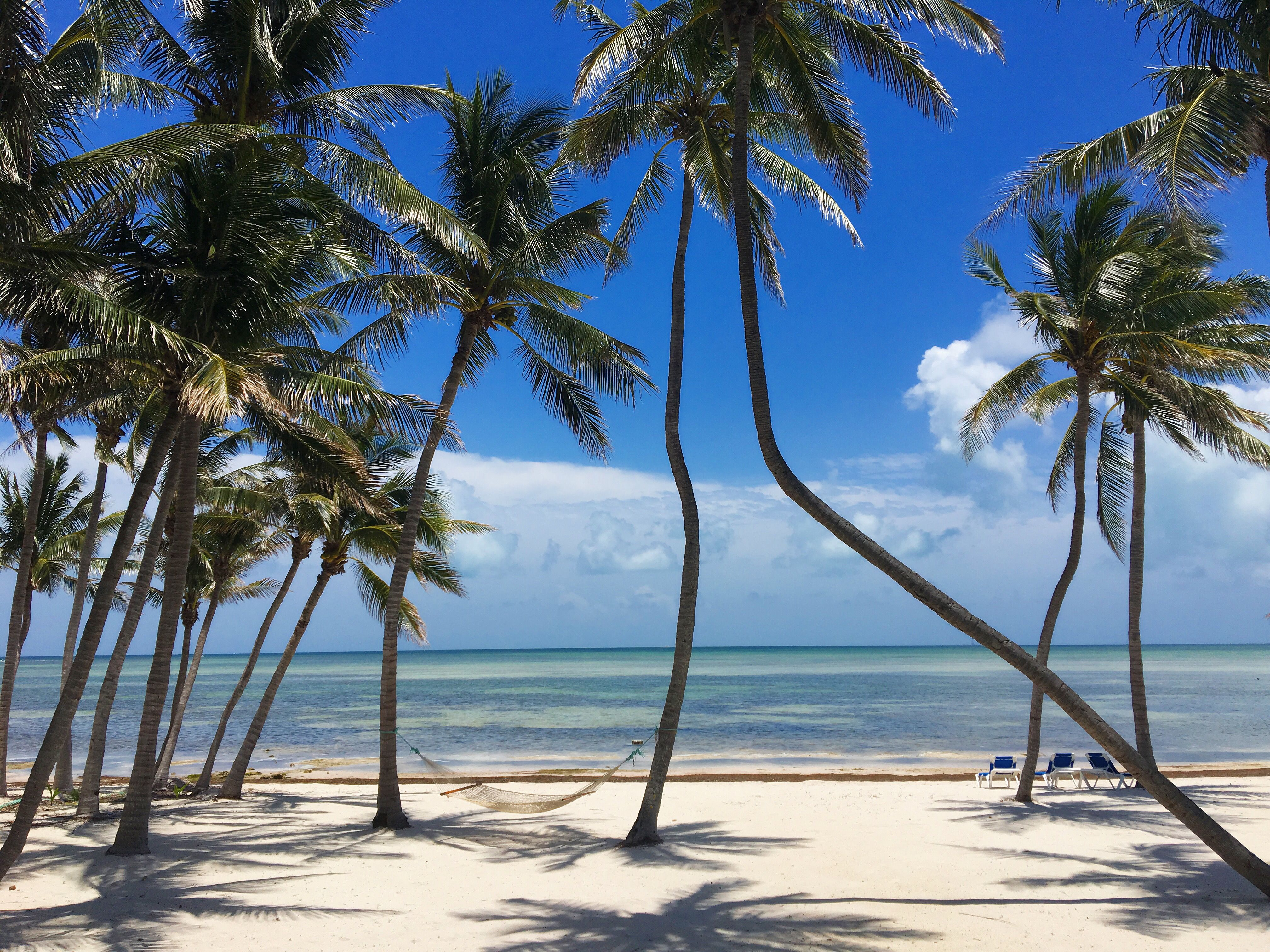 green turtle beach estate islamorada florida keys island rh pinterest com