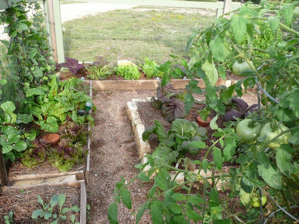 ollas in the garden olla irrigation dripping springs ollas rh pinterest com
