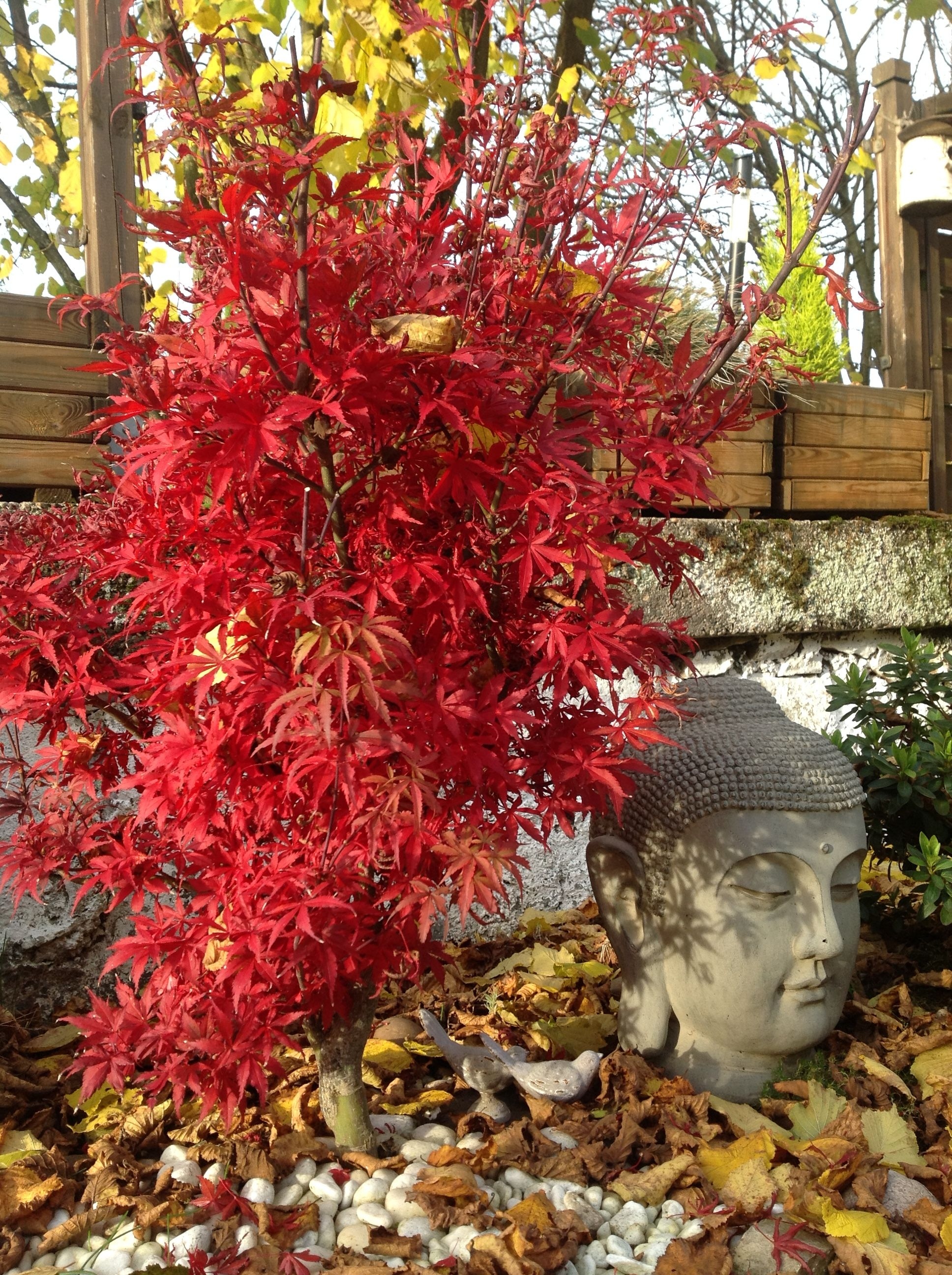 Pin by corinne jacquel on jardin japonais utilis pour for Pin jardin japonais