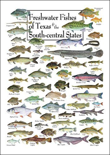 Freshwater fishes of texas south central states poster for Texas fish species