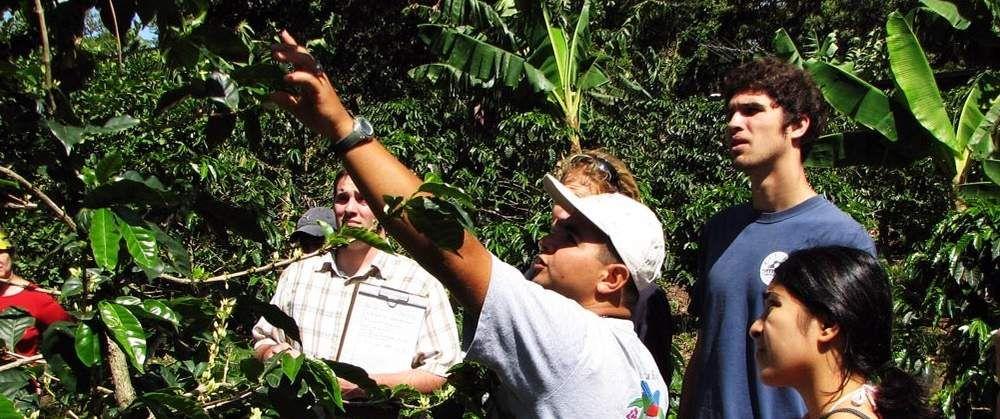 Monteverde Coffee Tour Costa rica tour, Monteverde