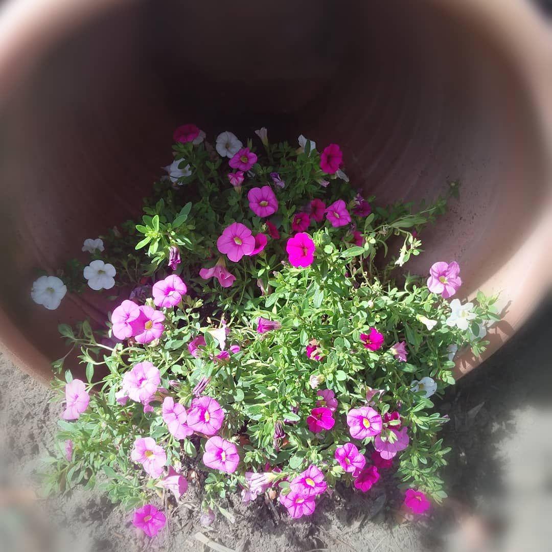 Blutenpracht Was Fur Eine Farbenfrohe Natur Blumen Bluten Bluhen Natur Farben Farbenfro Pflanzen Gartengestaltung Garten