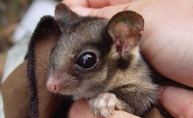 Pin By Beth Sexton On So Cute Australian Native Animals Australian Animals Australia Animals