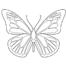 butterfly image coloring pages | Top 50 Free Printable Butterfly Coloring Pages Online ...