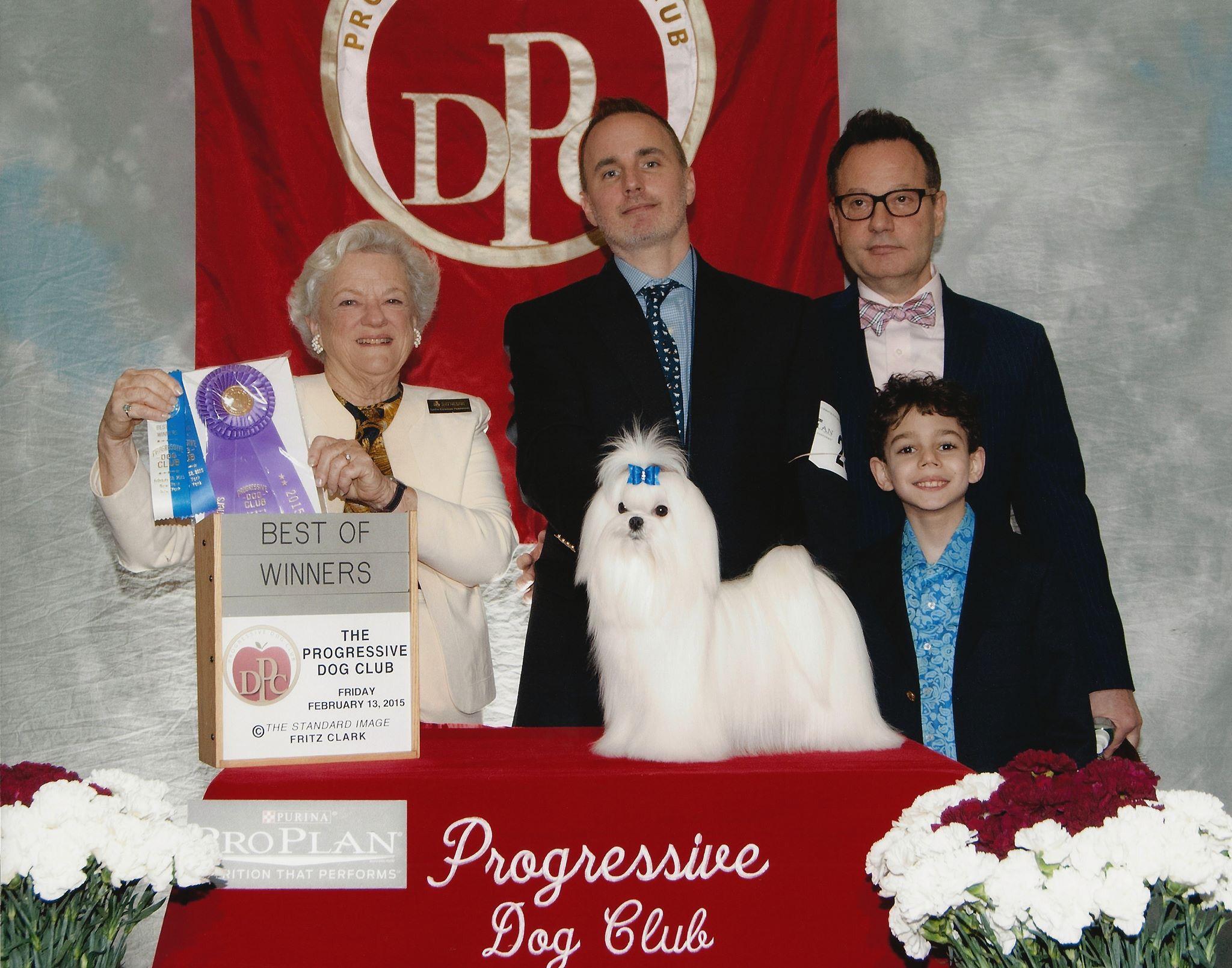 Maltese Puppy For Sale In Fullerton Ca Adn 69322 On Puppyfinder