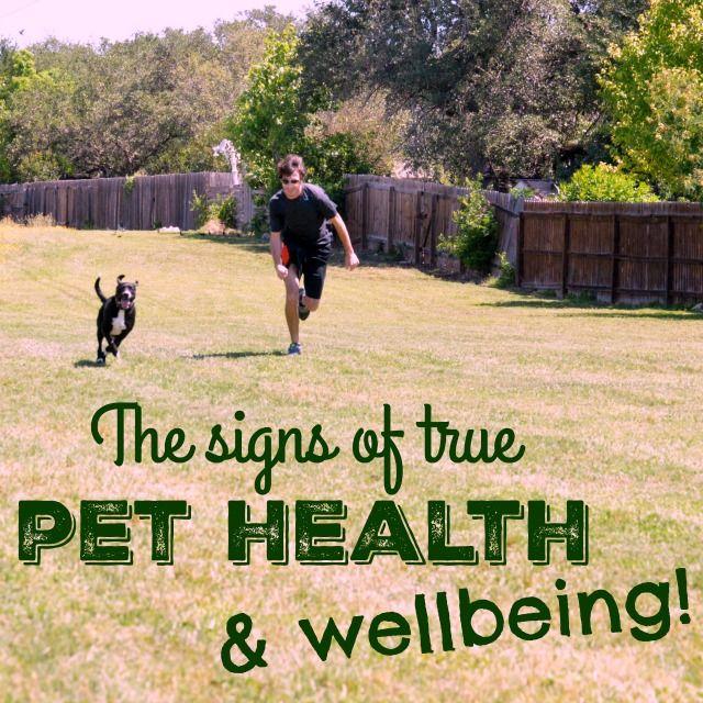 Pet Health Better Nutrition Adventuresof8 Com Pet Health Health And Wellbeing School Nutrition